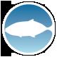 Машины для переработки рыбы